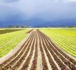 Agricoltura_rinnovabile_g
