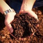 biomassa_g
